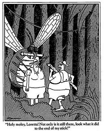Big Bug Cartoon
