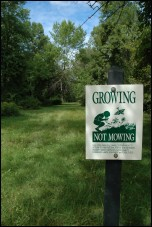 Growing, Not Mowing sign